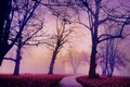 Картинка осень, город, туман, порк