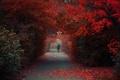 Картинка человек, парк, осень