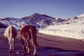 Картинка зима, дорога, небо, снег, горы, тень, лошади