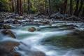 Картинка лес, деревья, природа, река, камни