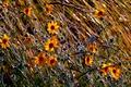 Картинка цветы, поле, трава, осень, луг