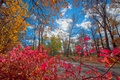 Картинка дорога, осень, лес, листья, деревья, парк, краски