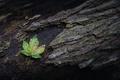Картинка природа, лист, дерево