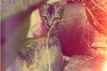 Картинка kittens, pet, cute, cat, полосатый, котёнок, взгляд