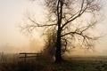 Картинка туман, утро, скамья