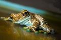 Картинка legs, frog, eyes, reptile