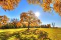 Картинка осень, небо, трава, солнце, лучи, деревья, парк