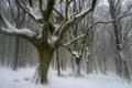 Картинка осень, лес, снег, деревья