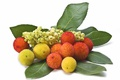 Картинка листья, природа, ягоды, плоды