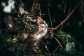 Картинка кот, взгляд, листья, охота, полосатый