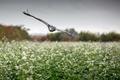 Картинка field, flight, wings, flowers, hawk, rainy