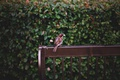 Картинка листья, воробей, перья, скамейка