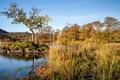 Картинка осень, небо, трава, деревья, озеро, остров