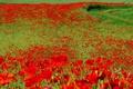 Картинка дорога, поле, трава, пейзаж, цветы, маки, луг