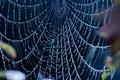Картинка Web, blue, droplets of water