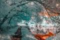 Картинка деревья, природа, река, цвет