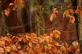 Картинка забор, осень, листья