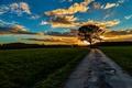 Картинка дерево, утро, дорога