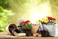 Картинка цветы, лопатка, луковицы, садоводство