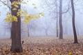 Картинка осень, лес, листья, деревья, туман, крест, кладбище
