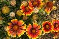 Картинка цветы, макро, лепестки