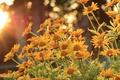 Картинка солнце, деревья, цветы, стебли, лепестки, боке