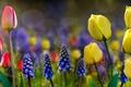Картинка цветы, природа, весна