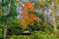 Картинка фото, Природа, Деревья, Парк, США, Atlanta