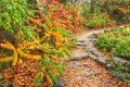 Картинка осень, листья, деревья, парк, дорожка
