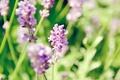 Картинка цветы, солнечно, полевые