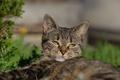 Картинка кот, морда, взгляд, кошка