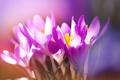 Картинка цветы, весна, природа