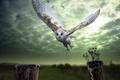 Картинка птица, фон, сова