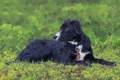 Картинка собака, взгляд, фон, друг