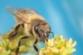 Картинка цветы, насекомое, крылышки, боке
