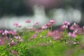 Картинка цветы, природа, фон