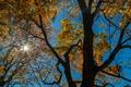 Картинка осень, небо, листья, лучи, дерево