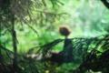Картинка зелень, лес, девушка, ветви, фигура, ёлки