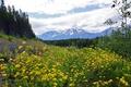 Картинка лес, деревья, цветы, горы, желтые, долина, Канада
