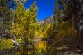 Картинка осень, лес, деревья, горы, река, Колорадо, США