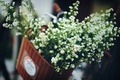 Картинка цветы, корзина, лепестки, белые