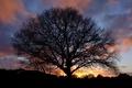 Картинка закат, природа, дерево, силуэт