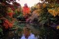 Картинка осень, листья, облака, деревья, озеро, отражение, зеркало