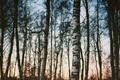 Картинка деревья, ветки, сумерки, лес