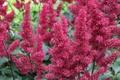 Картинка паутина, Розовый, цветы, пыльца