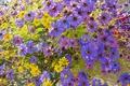 Картинка природа, лепестки, сад, луг, клумба