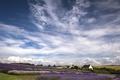 Картинка поле, небо, облака, природа, дома, лаванда