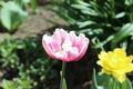 Картинка цветок, трава, цветы, желтый, природа, зеленый, розовый
