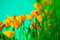 Картинка небо, листья, растение, лепестки