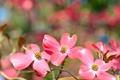 Картинка растение, лепестки, природа, цветы